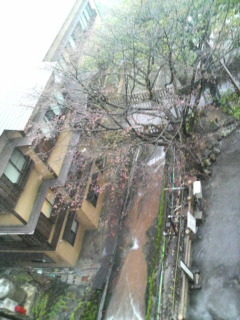 今朝は晴れて、今は雪!