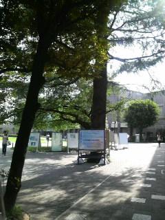 立教大学観光学部