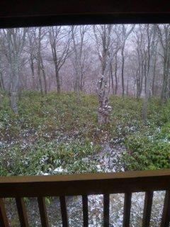 雪の朝です