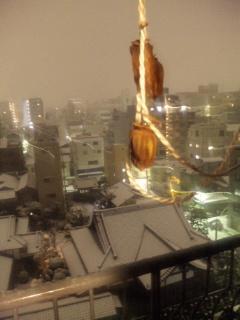 雪、積もってます