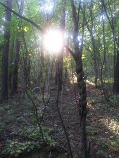 全ての森はつながっている…
