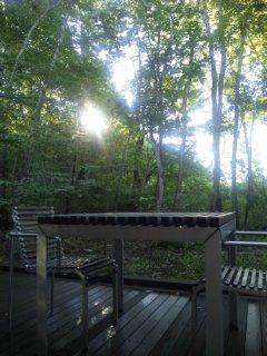 森のシルエットと温泉と。
