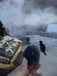 猫も気になる「ご長寿グルメ」