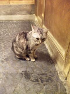 「ようこそ。」福招き猫・タンのおもてなし。