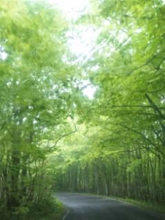 背中で感じるぶな原生林の息吹@蔦温泉