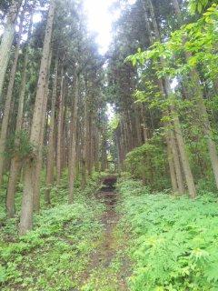 滴石たんたん@雫石神社