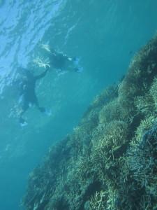 珊瑚の森へ…。